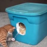 Ako vyrobiť izolovaný prístrešok pre túlavé mačky