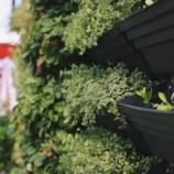 Skrášlite svoje bývanie zelenou stenou