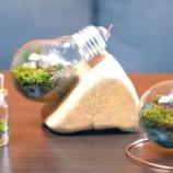 Ako vytvoriť miniatúrne terárium?