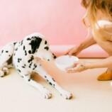 Typy granúl, ktoré bude váš pes zbožňovať