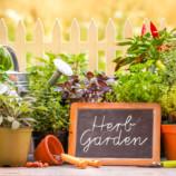 Ako pripraviť záhradu na jeseň a zimu?
