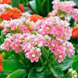 Kvety, farby a ich význam + TIP na záver