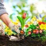 Lekcie, ktoré vám dá len záhrada