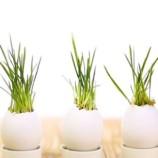 1 + 1 tip do záhrady a domácnosti